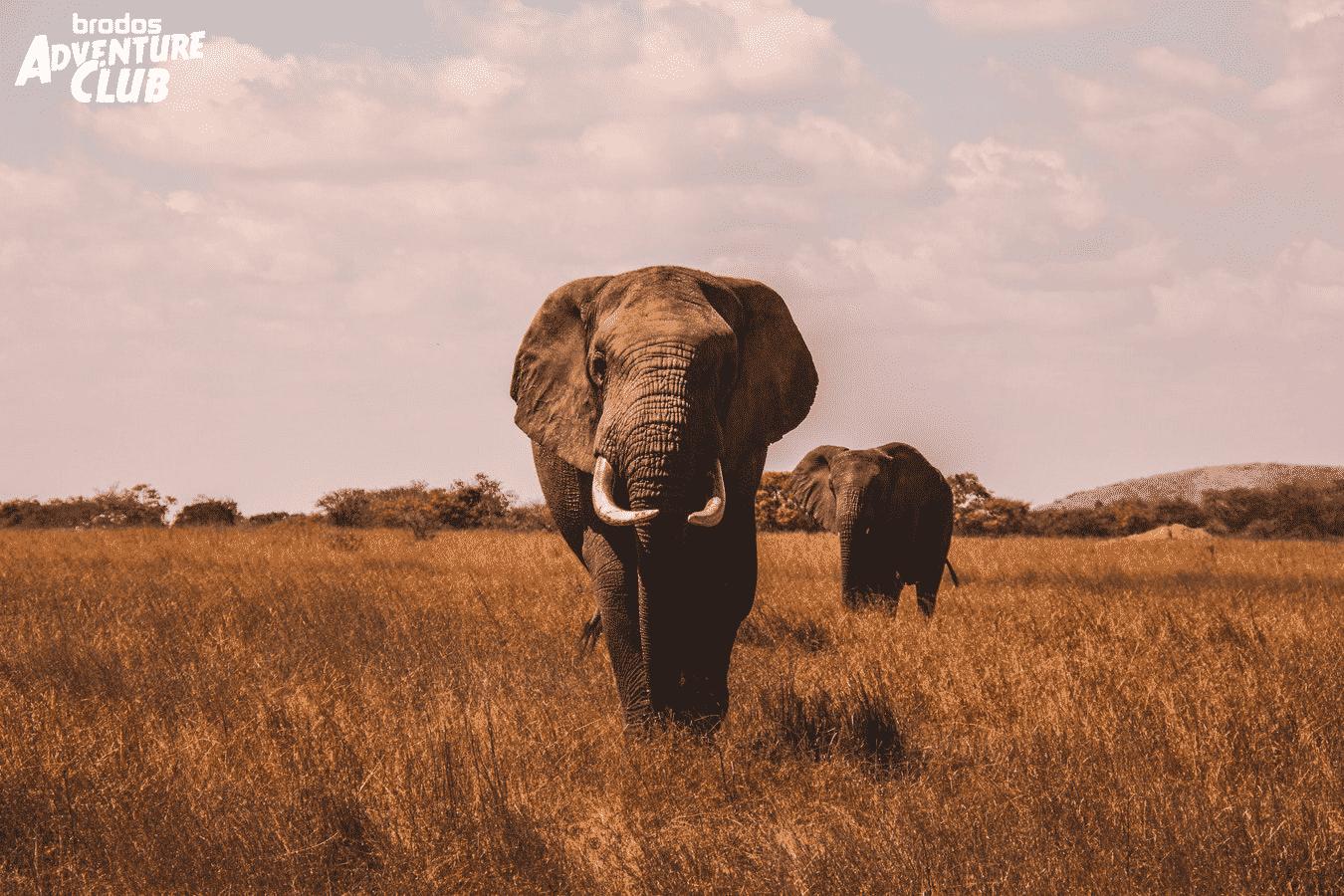 Vorreservierung: Wer möchte im November 2020 mit auf große Offroad Tour nach Afrika?