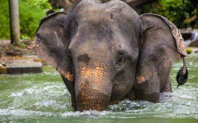 Brodos Elefanten Adventure in Thailand